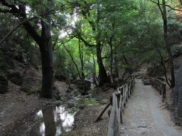Valle di Petaloudes Rodi