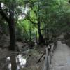 Valle di Petaloudes